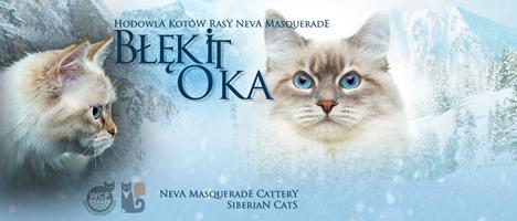 Hodowla Kotów Syberyjskich Neva Masquerade Błękit Oka
